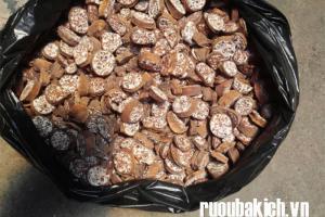 Điều trị sỏi thận với hạt chuối hột rừng