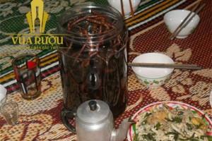 Rượu ba kích - Món quà vùng cao Quảng Nam