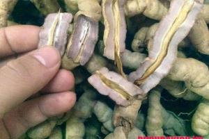 Đi tìm sự thật lõi củ ba kích có độc không?